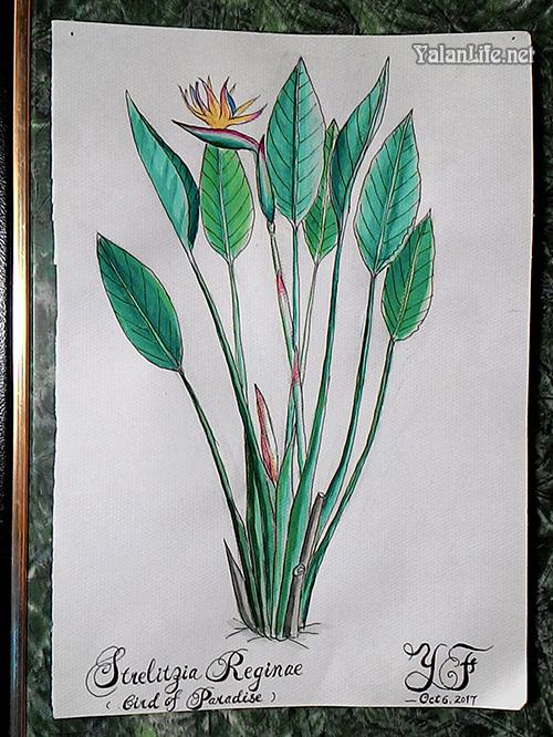 Taipei Life Art Watercolour Flowers Romanticism 台北生活 插画艺术 花卉 浪漫主义 Yalan雅岚文艺博客
